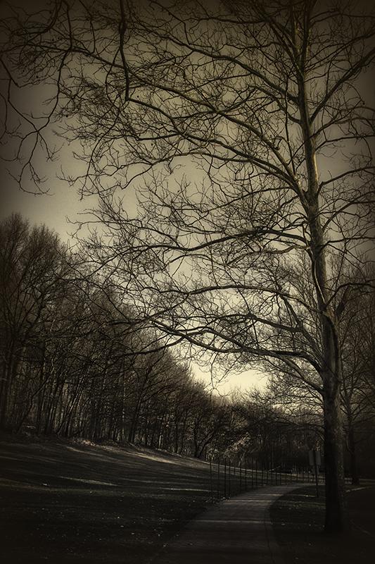 Black & White Spring
