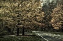 Mid Fall Drift